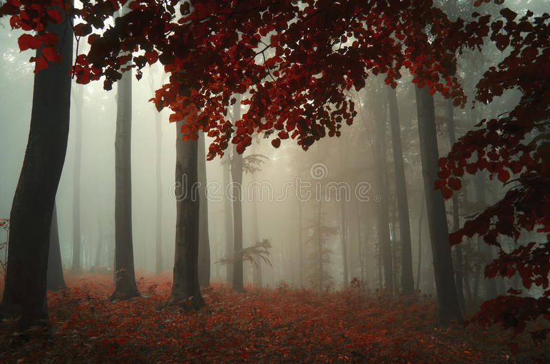 Baum mit Rot verlässt in verzaubertem magischem Wald mit Nebel stockfoto