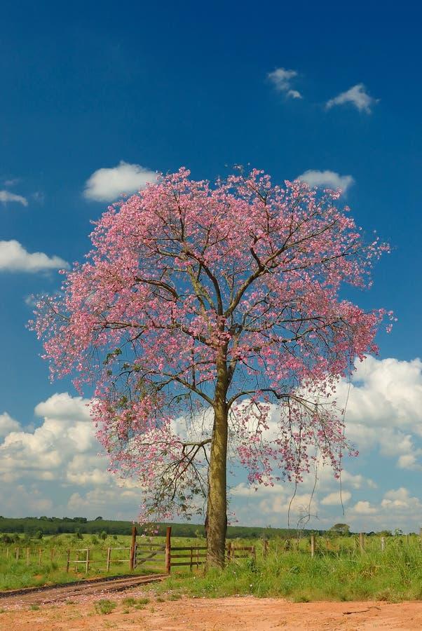 Baum mit roten Blumen und Wolken stockfoto
