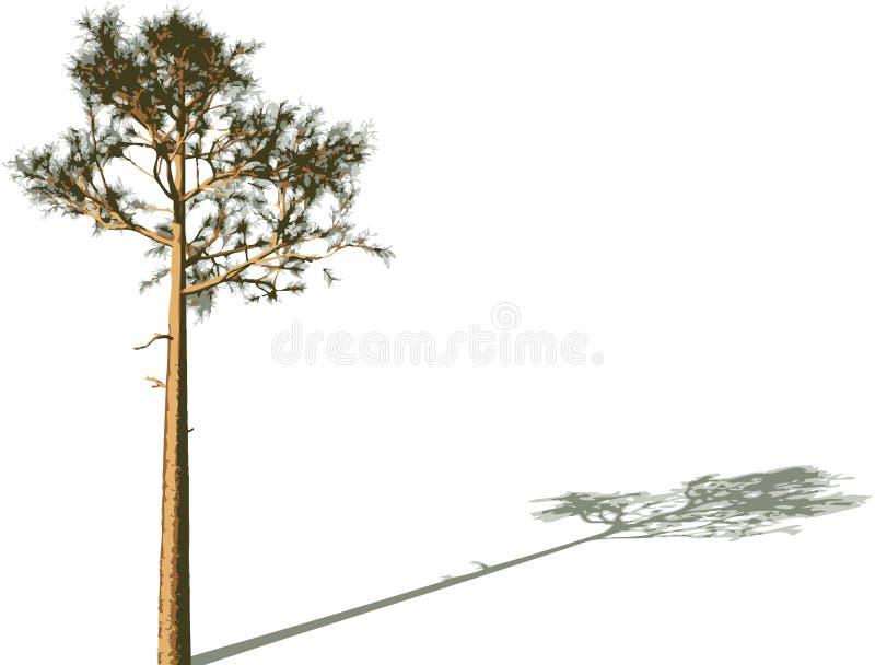 Baum mit Schatten. vektor abbildung