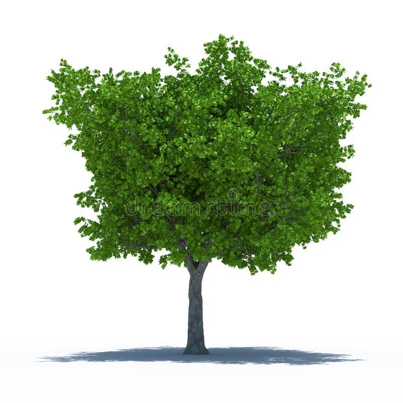 Baum mit Schatten vektor abbildung