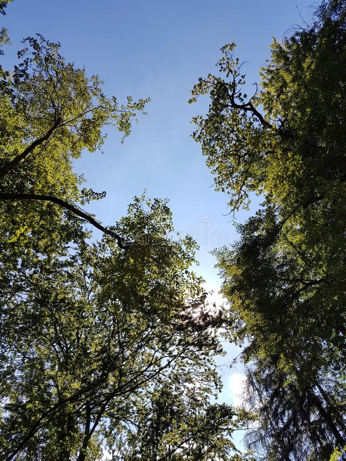 Baum mit Sonne stockbilder