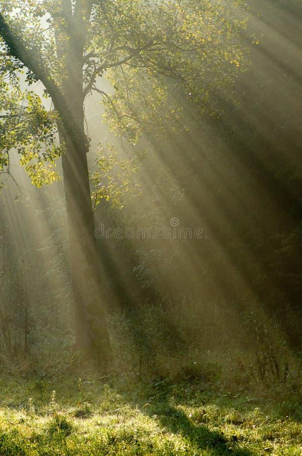 Baum mit Sunrays lizenzfreie stockbilder