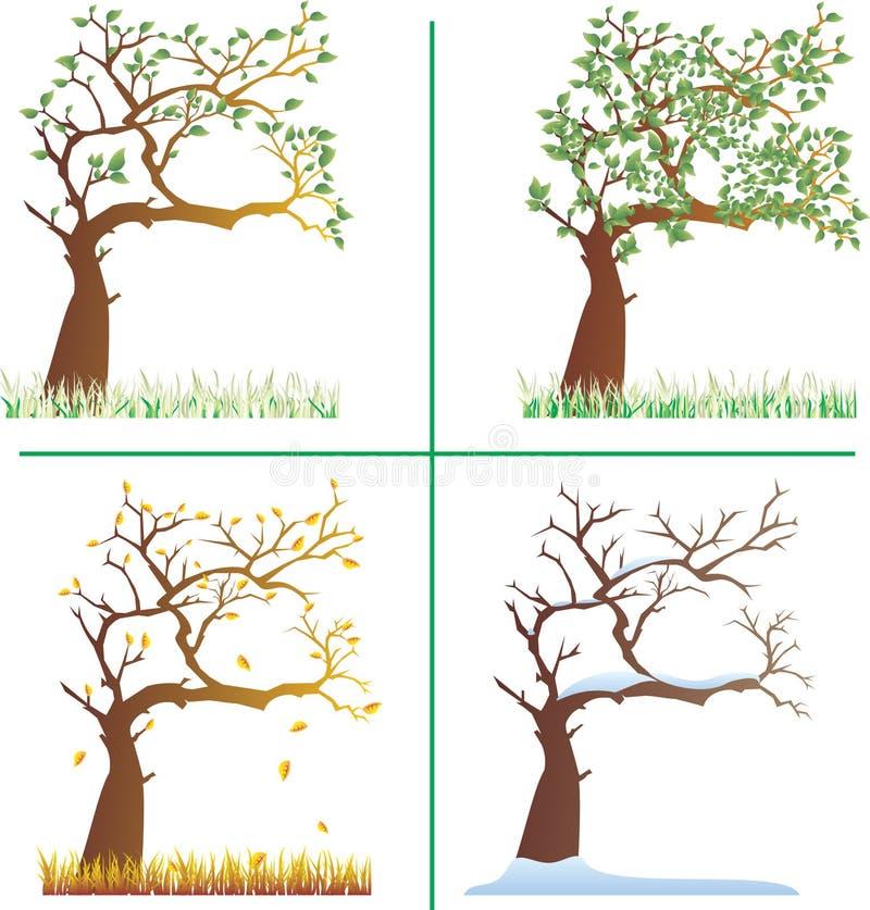 Baum mit vier Jahreszeiten. lizenzfreie abbildung
