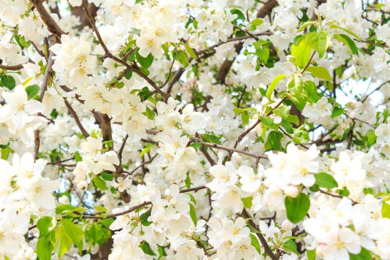 Atemberaubend Pics Von Weißen Blumen Galerie - Kleider und Blumen ...