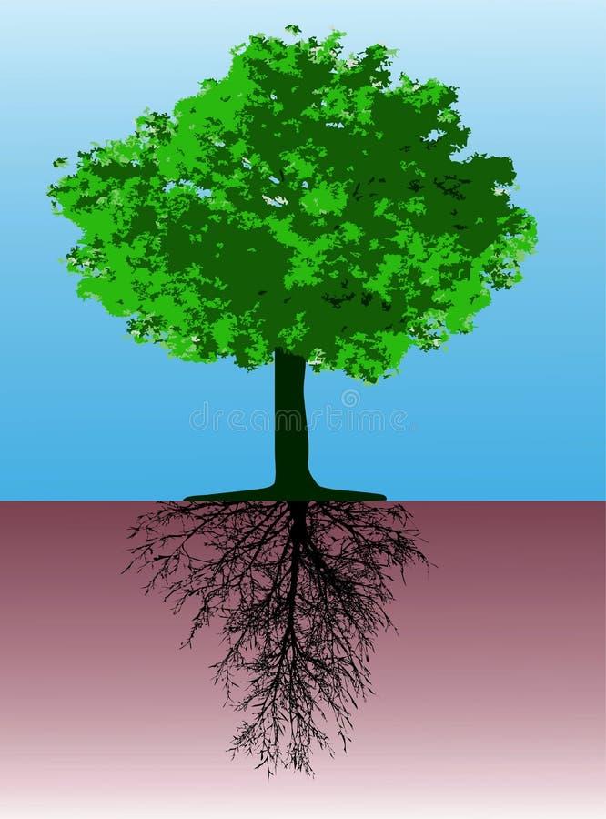 Baum mit Wurzeln lizenzfreie abbildung