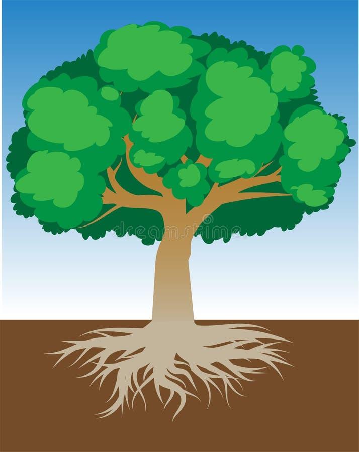 Baum mit Wurzeln und dichtem Laub, Vektorillustration vektor abbildung