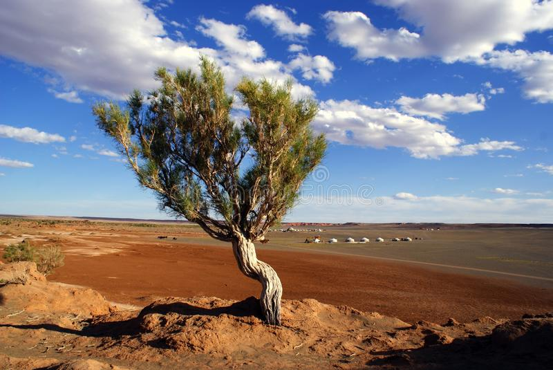 Baum in Mongolei lizenzfreie stockfotografie
