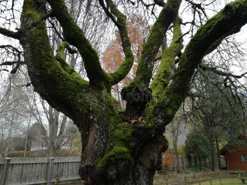 Baum baum moos Holznatur lizenzfreies stockbild