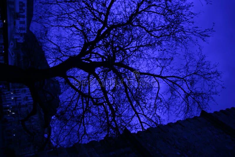 Baum nachts lizenzfreies stockbild