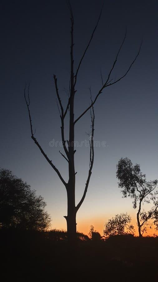 Baum nachts stockfotos