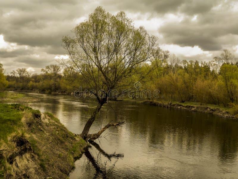 Baum nahe dem Wasser stockbilder