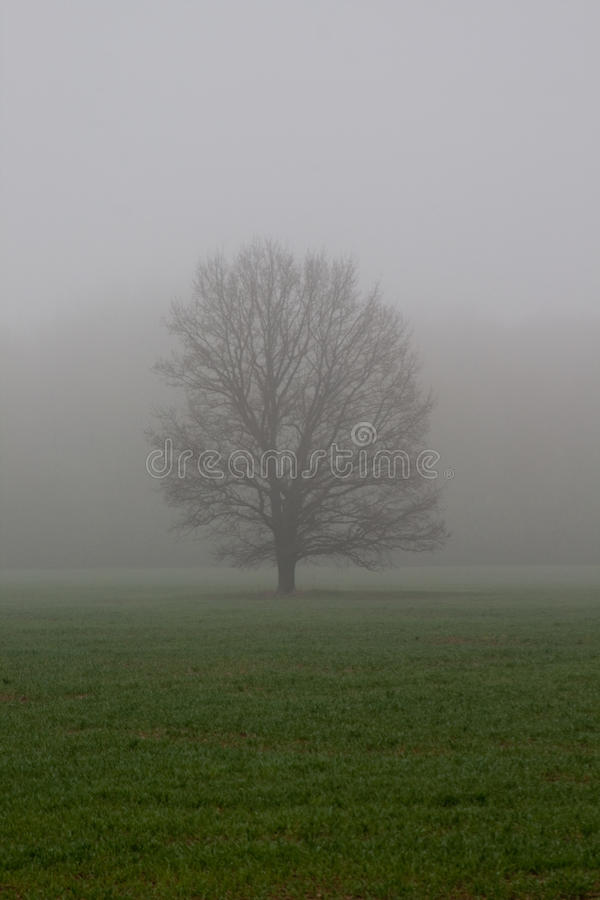 Baum am Nebel stockfotos