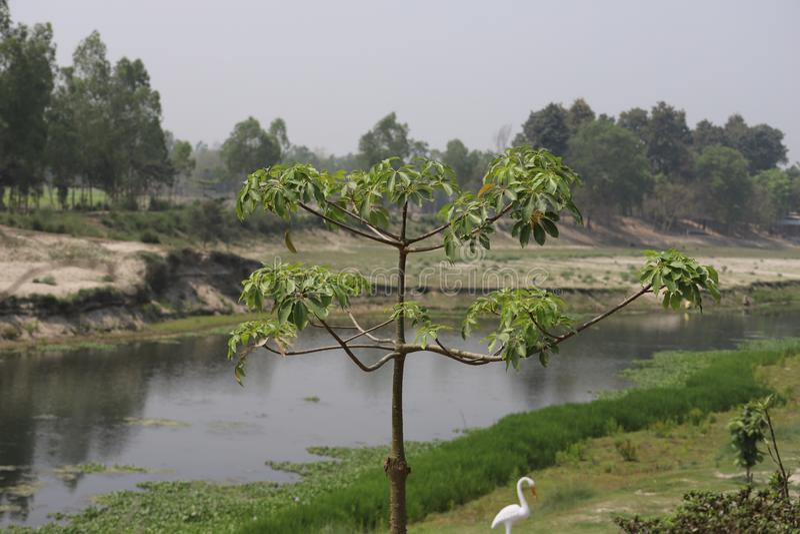 Baum neben dem Fluss lizenzfreie stockfotos