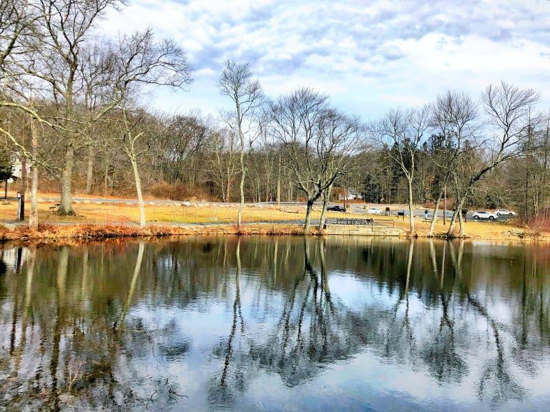Baum-Niederlassungsreflexion auf dem Wasser stockbild