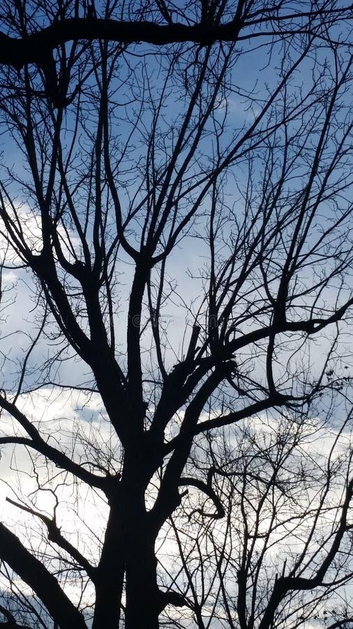Baum ohne Blätter lizenzfreies stockbild