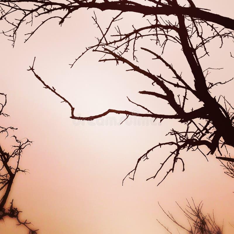 Baum ohne Blätter in der rosa orange Winterumwelt stockbilder