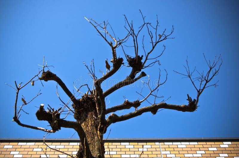 Baum ohne Blatt lizenzfreie stockbilder