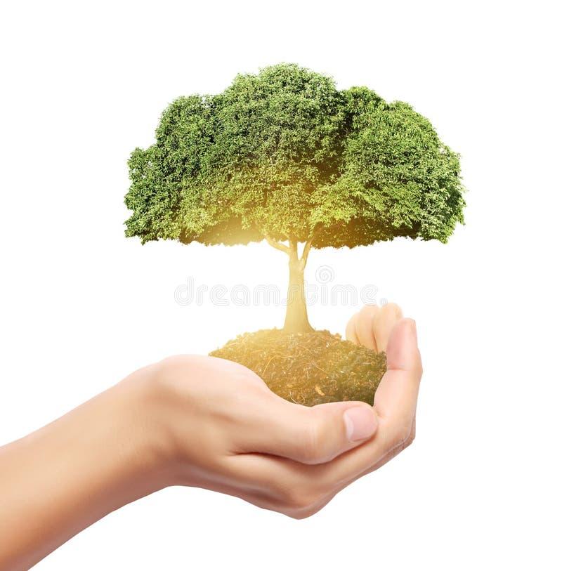 Baum prägt in der Hand stockfoto