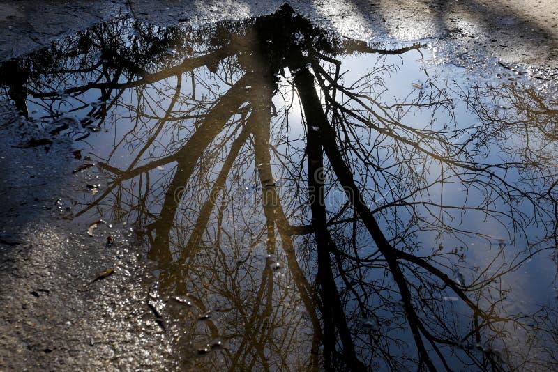 Baum reflektiert in der Pfütze stockfoto