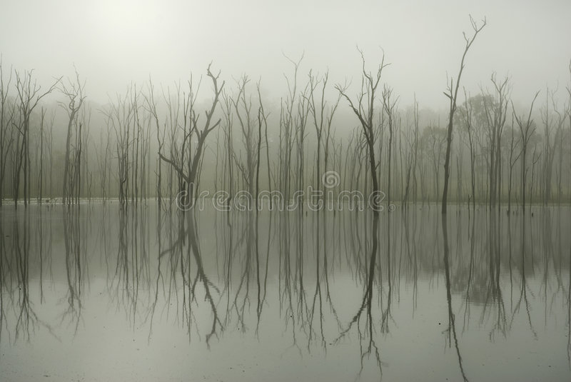 Baum-Reflexion lizenzfreie stockbilder
