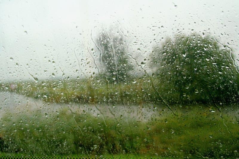 Baum-Regen stockbilder