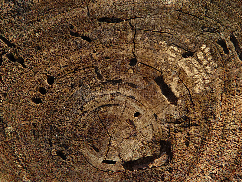 Download Baum-Ringe stockfoto. Bild von schleife, baum, kreuz, schnitt - 43512