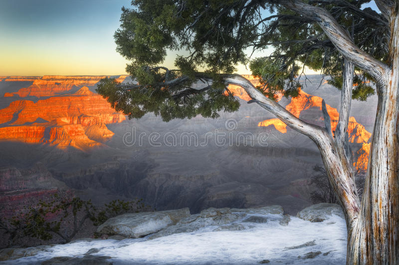 Baum, Südkante, Nationalpark Grand Canyon s, Arizona stockbild