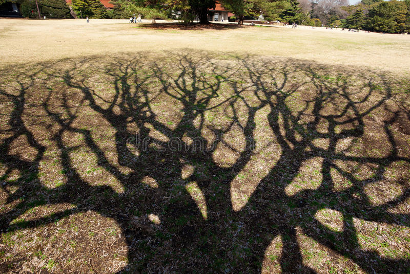 Baum `s Schatten lizenzfreie stockbilder