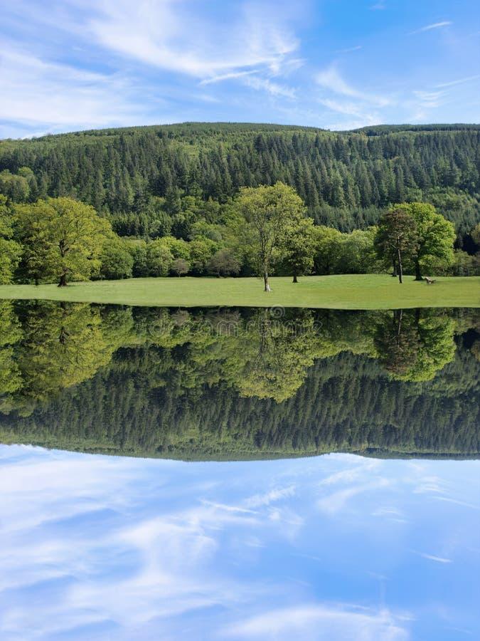 Baum-Schönheit lizenzfreies stockfoto