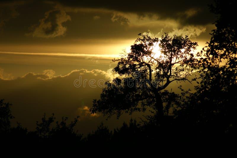 Baum-Schattenbild stockbild