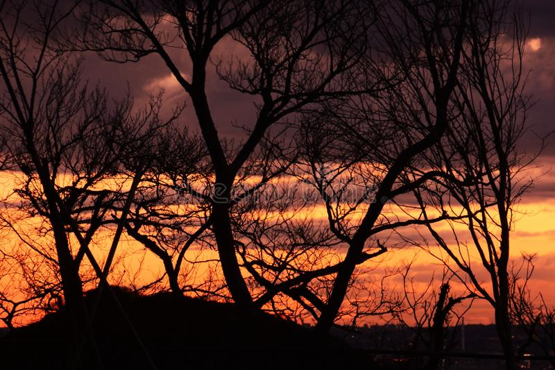 Baum-Schattenbild stockfoto