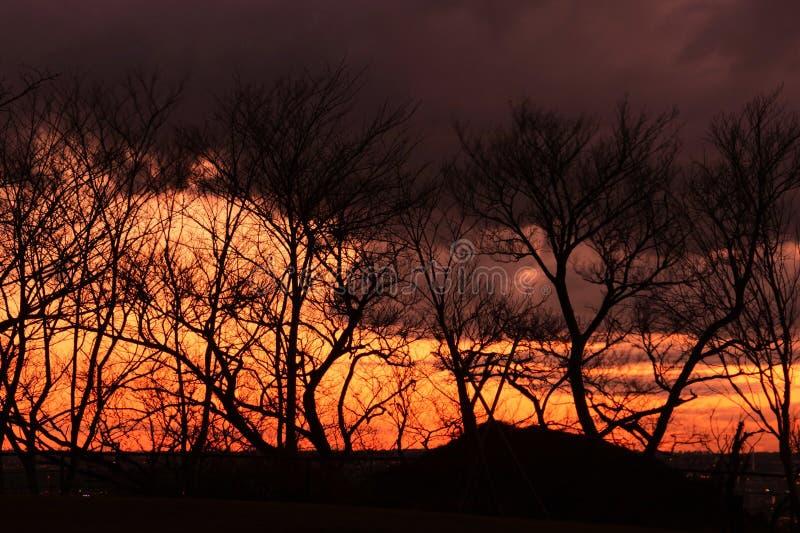 Baum-Schattenbild stockfotografie