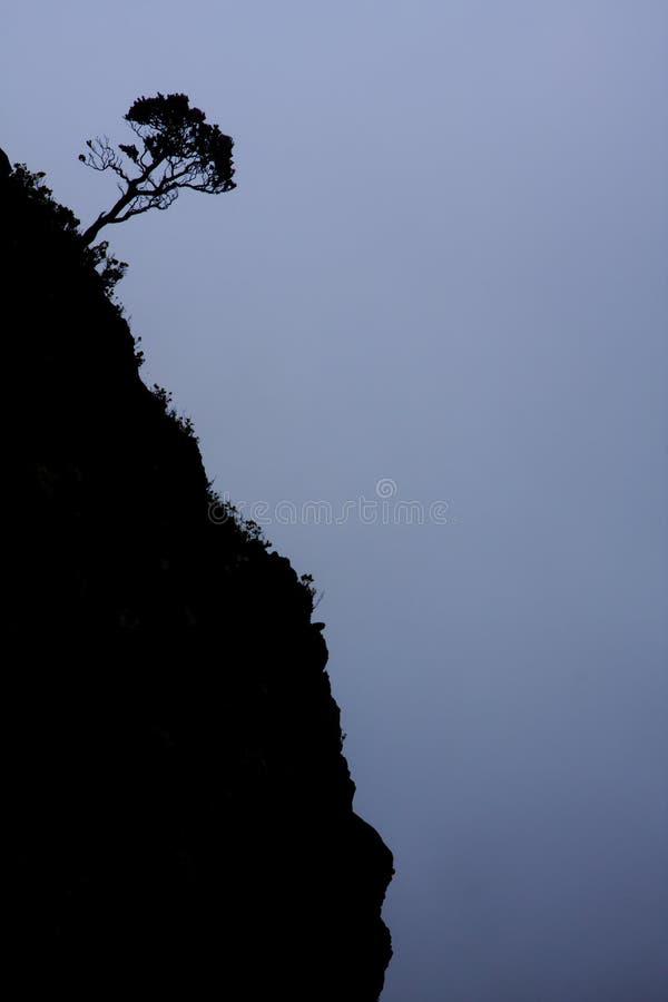 Baum-Schattenbild auf steiler Gebirgssteigung lizenzfreie stockfotografie