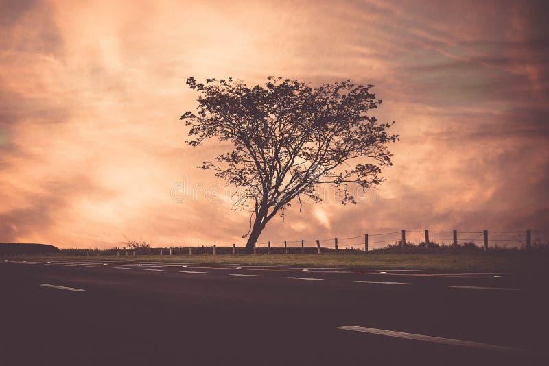 Baum-Schattenbild bei Sonnenuntergang lizenzfreie stockfotos