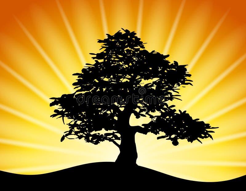 Baum-Schattenbild-Goldsonnenuntergang-Strahlen
