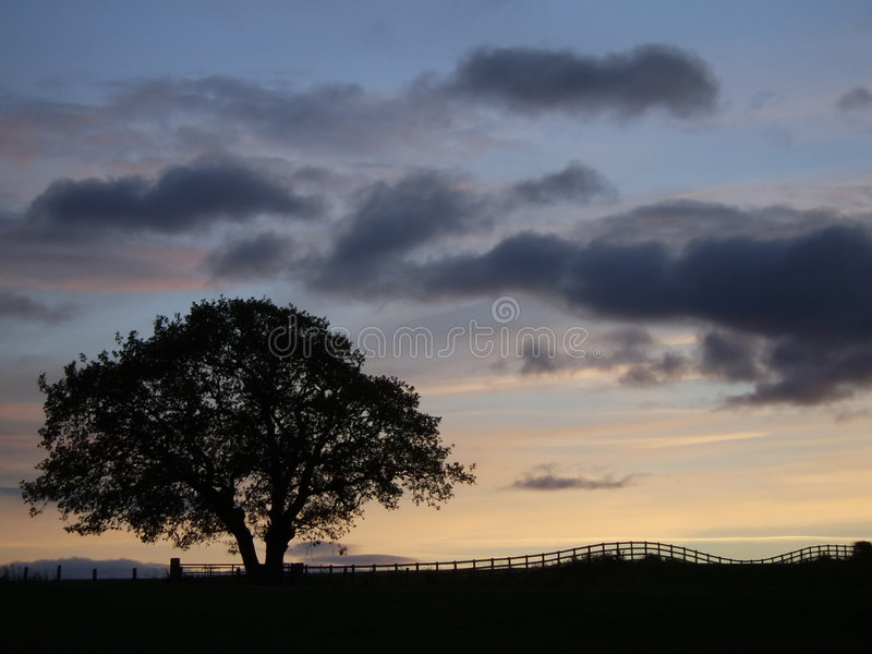 Baum-Schattenbild am Sonnenuntergang stockfotografie