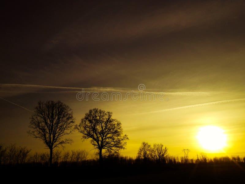 Baum-Schattenbilder im Sonnenuntergang lizenzfreie stockfotografie