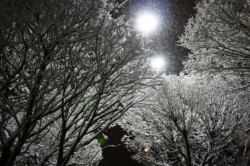 Baum, Schnee, Winter in den Niederlanden lizenzfreies stockfoto