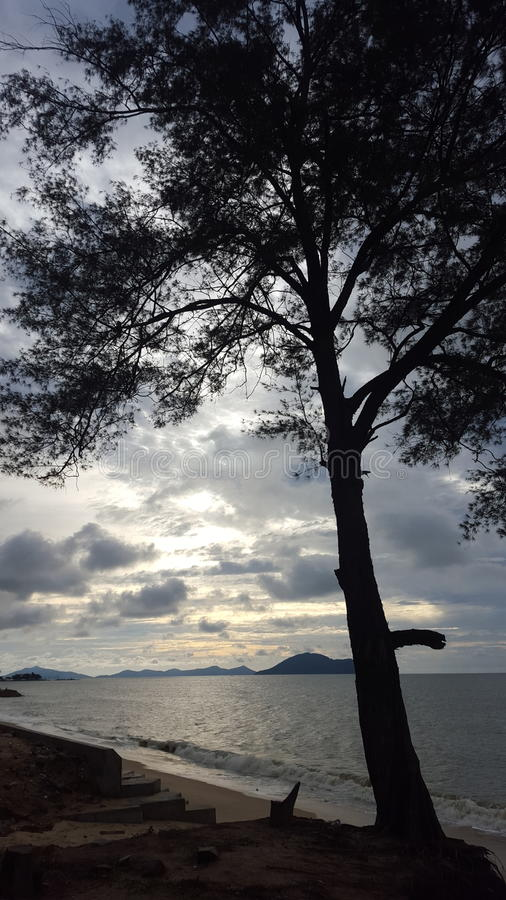 Baum Sihouette auf dem Strand stockbilder