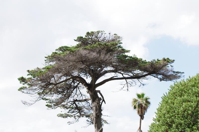 Baum silhouettiert gegen blauen Himmel stockfotografie