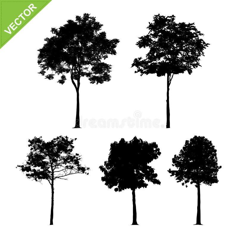 Baum silhouettiert Vektor vektor abbildung