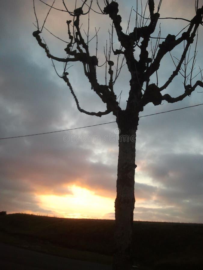 Baum-Sonnenuntergang lizenzfreie stockfotos
