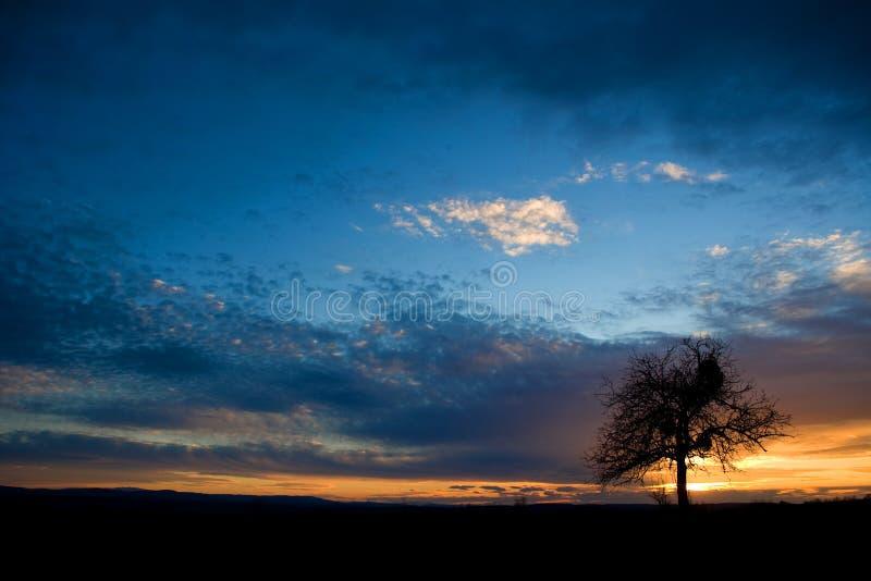 Baum am Sonnenuntergang stockbilder