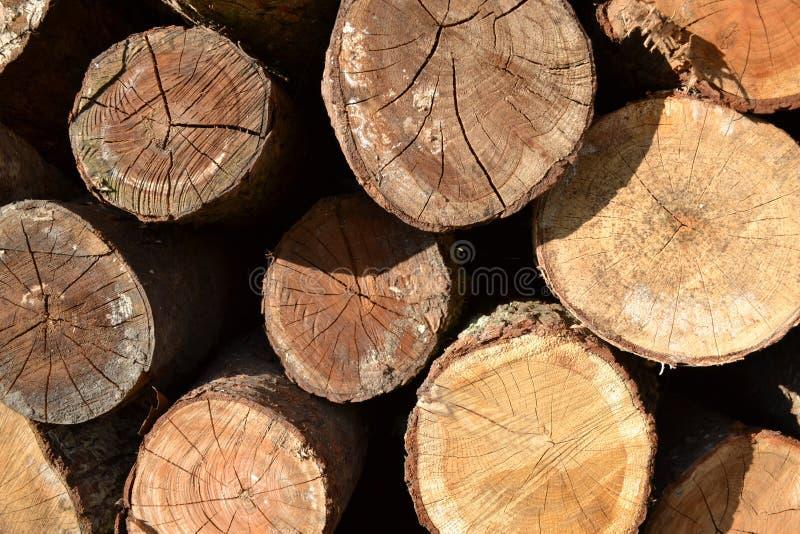 Baum, Stümpfe stockfoto