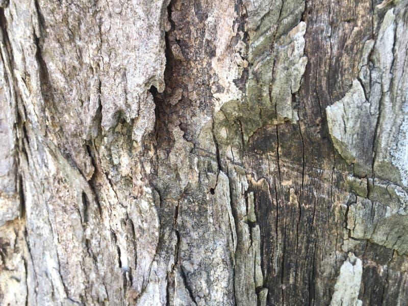 Baum-Stamm der hohen Qualität lizenzfreies stockfoto