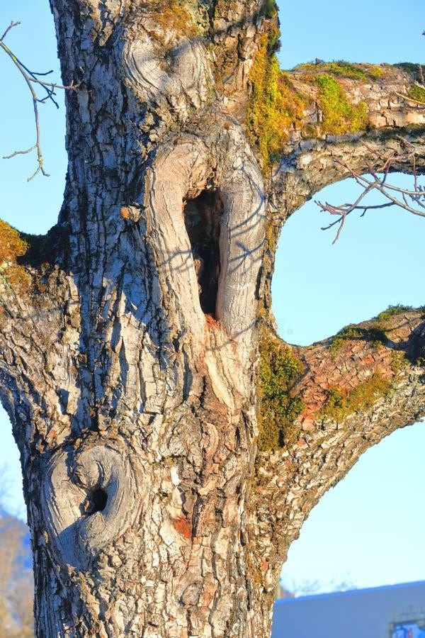 Baum-Stamm-Höhle oder Hohlraum stockfotografie