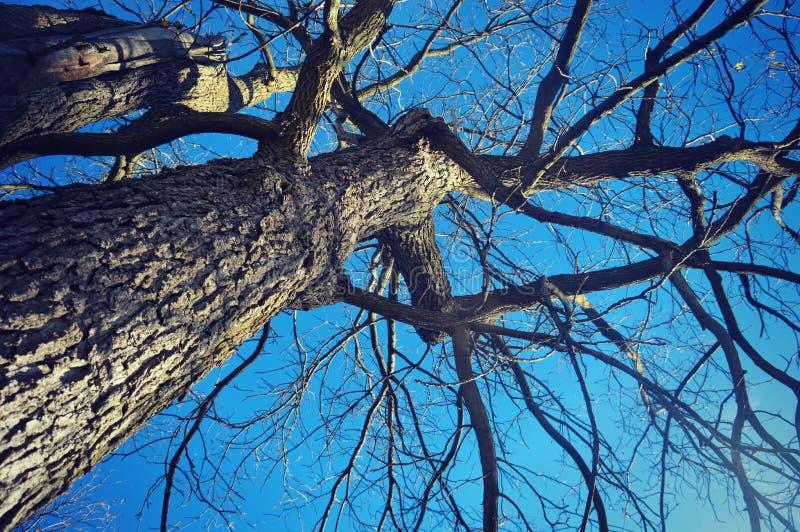 Baum-Stamm und Niederlassungen lizenzfreies stockbild