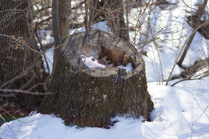 Baum-Stumpf lizenzfreies stockfoto