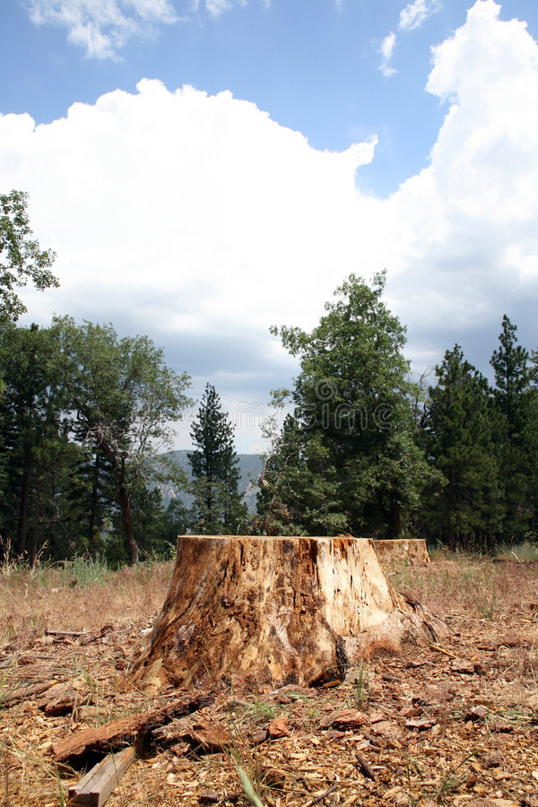 Baum-Stumpf im Holz lizenzfreie stockfotos