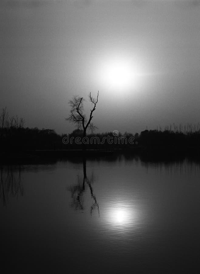 Baum u. Sonne stockbilder